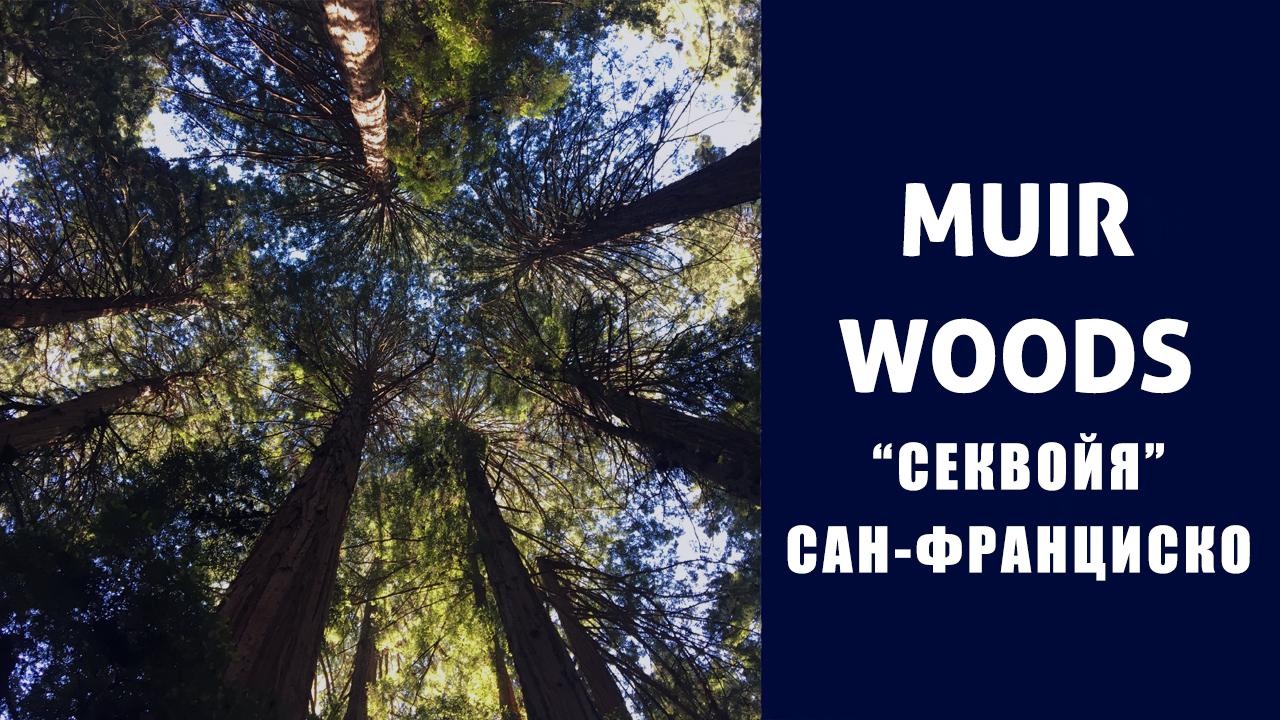 Muir Woods: самый удивительный лес в мире!