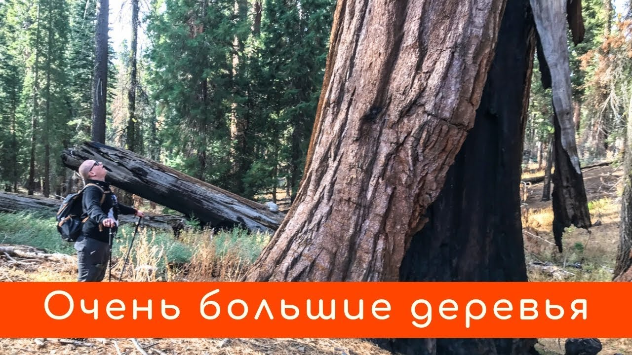 Секвойи рощи Марипоса в Йосемити / круче чем Гигантский лес